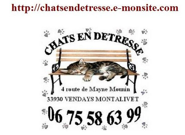 association protection feline CHATS EN DETRESSE