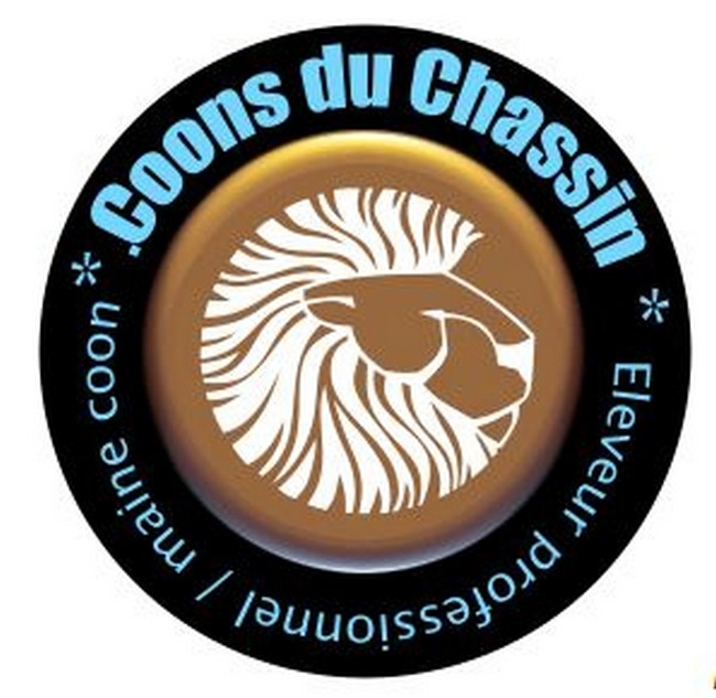 MAIN COONS ELEVAGE DU CHASSIN